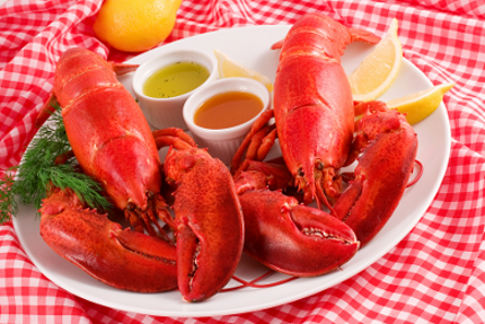 Two pound steamed Maine lobsters on a plate