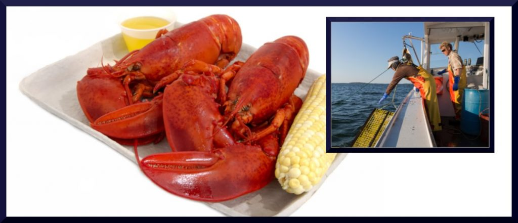 hauling lobster from trap and cooked lobster